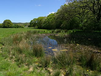 People's Trust for Endangered Species - One of fifteen new ponds at Briddlesford Nature Reserve created since the year 2000 as part of the Million Ponds Project.