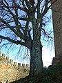 Vista no interior da muralha do castelo de Belver.jpg