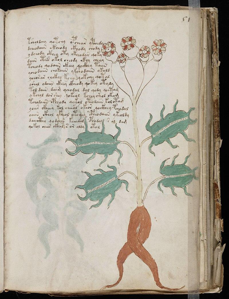 Voynich Manuscript (101).jpg