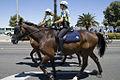WA Police Mounted Horses.jpg