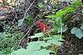 Wapta Falls Trail IMG 4941.JPG