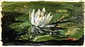 Water Lily in Sunlight by John La Farge.jpeg