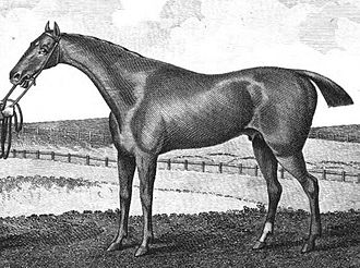 Waxy (horse) - Engraving of Waxy based on a painting by Francis Sartorius.
