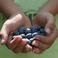 Weather tomorrow- sunny with plentiful blueberries.jpg