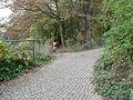 Weg zur Sumpfzypreese über Pfad spreeaufwärts, Cottbus.jpg