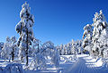 Welcome to Krokskogen (3287801824).jpg