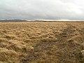 Wet Moor - geograph.org.uk - 351851.jpg