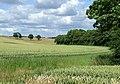 Wheat Fields near Aston Eyre, Shropshire - geograph.org.uk - 488432.jpg
