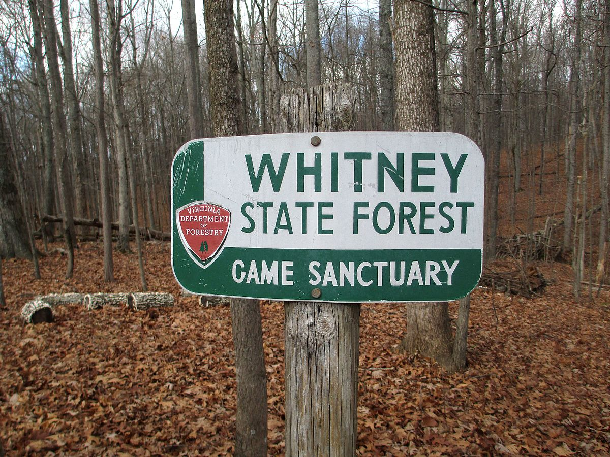 wiki list national forests