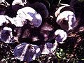 Wild mosroom 2.jpg