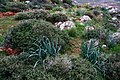 Wild plants - panoramio.jpg