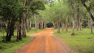 Wilpattu National Park National park of Srilanka