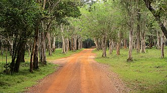 Wilpattu National Park - One of the many trails within the park