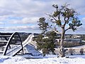 Winter in Austin - panoramio.jpg