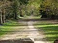 Woodland path in dappled sunshine (14171474933).jpg