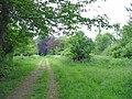 Woodland track Crichel estate Moor Crichel Dorset - geograph.org.uk - 187838.jpg