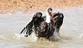 Woolly-necked stork, Bishop stork or White-necked stork, Ciconia episcopus, at uMkhuze Game Reserve, kwaZulu-Natal, South Africa - having a bath (15487977172).jpg