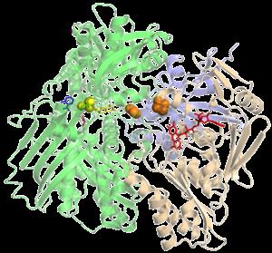 Xanthine oxidase - Image: Xanthine Oxidase 1FIQ