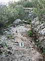 Yagur – Nesher, the Green Path – Mount Carmel 105.JPG