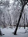 Yard - panoramio - Alexander Murvanidze.jpg