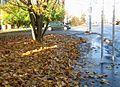 Zlatý koberec - panoramio.jpg
