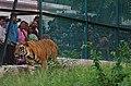 Zoo of Ahmedabad, India (4052632878).jpg