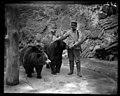 Zookeeper and bears (3404663573).jpg