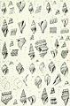 Zoologische Jahrbücher (1905) (14778200291).jpg
