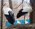 Zoopark Baku 131.jpg