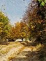 (((مناظر پاییزی باغات مراغه))) - panoramio (3).jpg