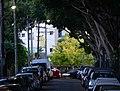 (1)Mulwarree Avenue Randwick.jpg