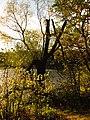 (PL) Polska - Warmia - Ścieżka nad jeziorem Długim w Lesie Miejskim w Olsztynie - Path on the Long Lake in the City Forest in Olsztyn (9.X.2012) - panoramio (18).jpg