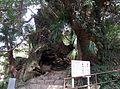 Ōyamazumi-jinja ikikinogomon.JPG