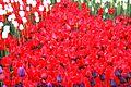 Виставка тюльпанів 11.JPG
