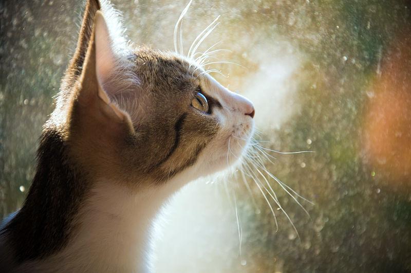 File:Котёнок у окна.jpg