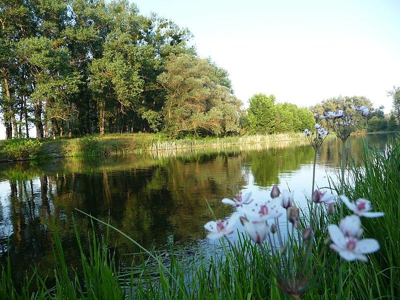 Гадяцький регіональний ландшафтний парк. Автор фото — Людмила Гнипа (CC-BY-SA-4.0)