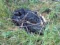 Нечистоты, сваленные в парке 330-го стрелкового полка, при чистке канализационных колодцев - panoramio (1).jpg