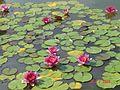 Нікітський Ботанічний сад.jpg
