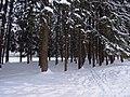 Парк усадьбы Воздвиженское зимой, Серпуховский район.jpg