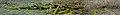 """Сфагнові мохи болота """"Чорний Ліс"""".jpg"""