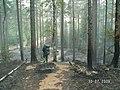 Тропа от пос. Канельярви .Холм . Низовой пожар 2006 . - panoramio.jpg