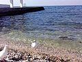 Чайки на березі.jpg