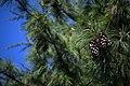 عکس از گلها و گیاهان باغ بوتانیکال تفلیس - گرجستان 44.jpg