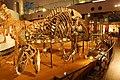 アロサウルスの骨格化石.jpg