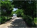 乡村路 - panoramio (7).jpg