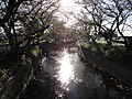 五条川 - panoramio.jpg