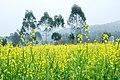 广州最美乡村—红山村 - panoramio (8).jpg