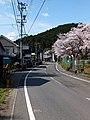 春の県道255号 - panoramio.jpg
