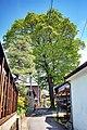 滝呂のエノキ(保存樹ではない) - panoramio.jpg