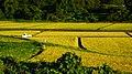 稲刈りの準備 - panoramio.jpg